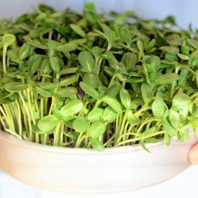 How To Grow Micro Greens | WholeLifestyleNutrition.com