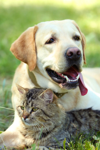 Get rid of dog and cat urine odor naturally!
