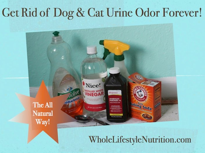 Get Rid Of Dog And Cat Urine Odor The All Natural Way |  WholeLifestyleNutrition.com