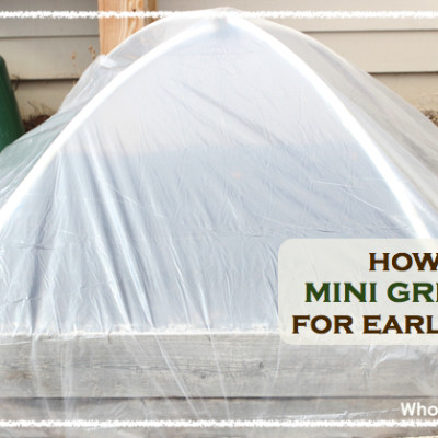 How To Build A Mini Greenhouse For Early Planting in 5 Easy Steps!