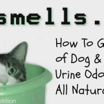 Natural Remedies To Get Rid Of Cat Urine Odor