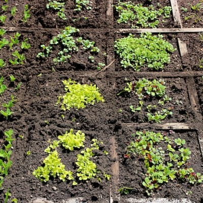 Something Exciting To Share and How To Thin Seedlings For A Healthier Plant