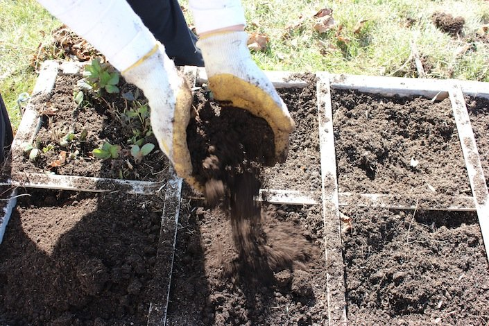 Add 2-3 large handfuls of organic compost or organic soil