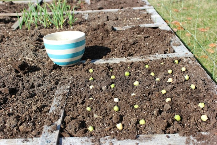Planting Seeds Has Never Been So Easy! | WholeLifestyleNutrition.com