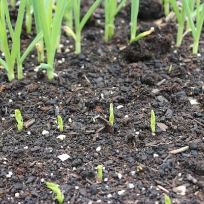 Spring Planting, Sowing Seeds & Sprouting Seeds