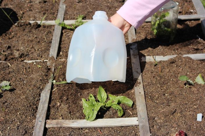 4 maneras de utilizar un marco frío | Bellas Jardinería