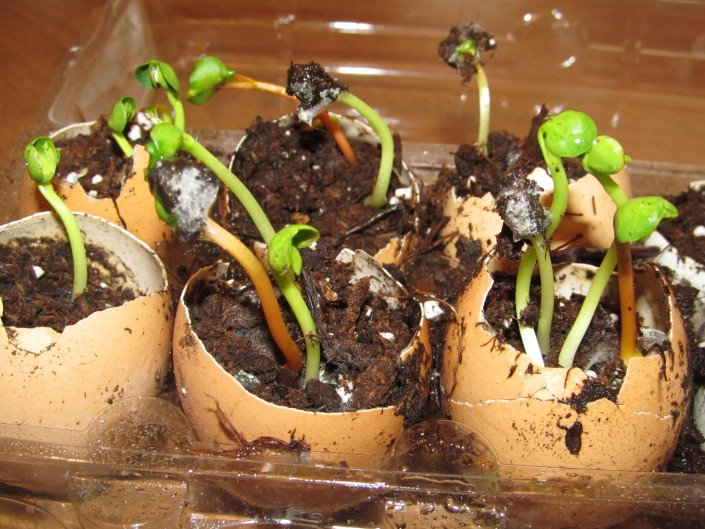 How To Start Seeds In Eggshells, A Step By Step Approach | WholeLifestyleNutrition.com