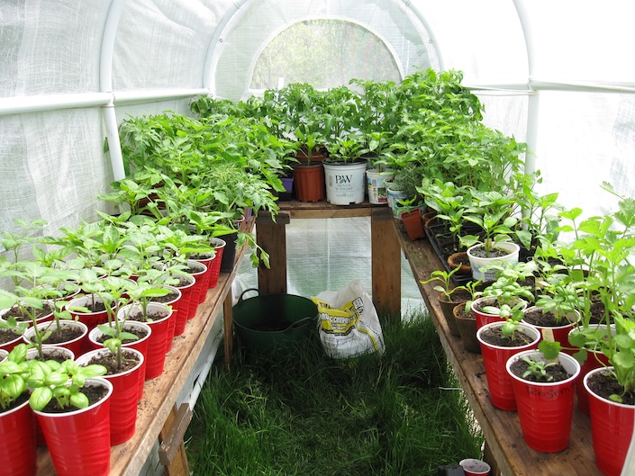 You Also Can Get A Jump Start On Starting Your Seeds When Have Greenhouse