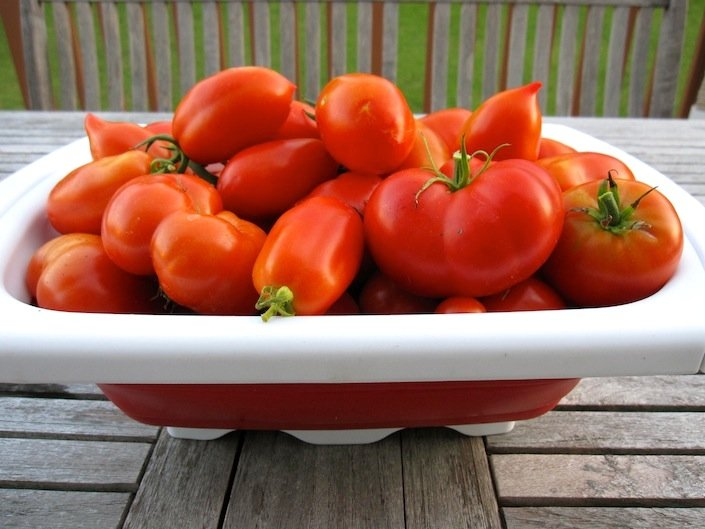 Follow This One Tip In Your Garden & Get A Ton Of Organic Tomatoes | WholeLifestyleNutrition.com