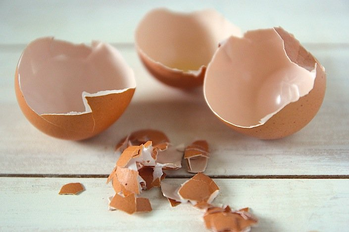 Learn How To Plant Seeds In Eggshells | WholeLifestyleNutrition.com