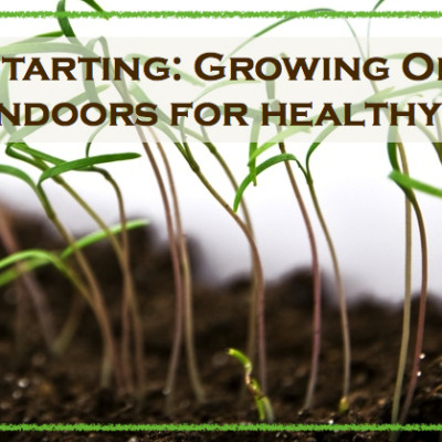 Seed Starting: Growing Your Organic Seeds Indoors For Healthy Plants