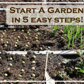 Start A Garden In 5 Easy Steps | WholeLifestyleNutrition.com