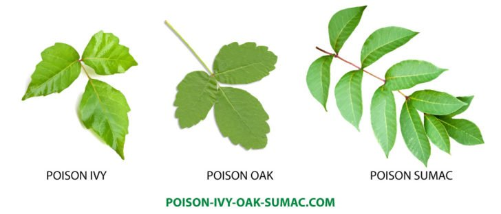 Remèdes à la maison pour Poison Ivy | WholeLifestyleNutrition.com | WholeLifestyleNutrition.com