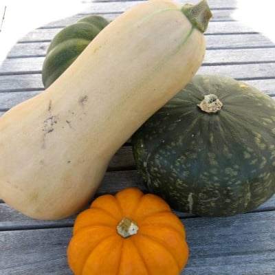 All About Organic Pumpkins and Squashes and How To Cook Them